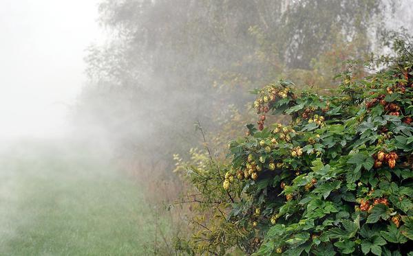 zamgławiacz ogrodowy